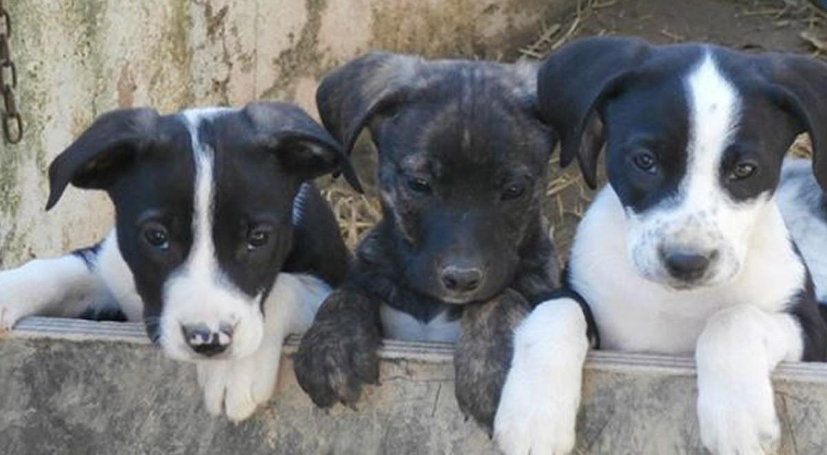 puppies 1200x661 copy