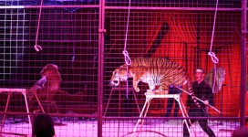 ban circus animals1200x661 copy